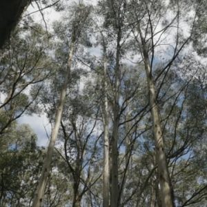 Walking trails of the Macedon Ranges